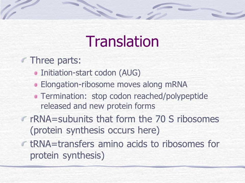 Translation Three parts: Initiation-start codon (AUG) Elongation-ribosome moves along mRNA Termination: stop codon reached/polypeptide released and new protein forms rRNA=subunits that form the 70 S ribosomes (protein synthesis occurs here) tRNA=transfers amino acids to ribosomes for protein synthesis)