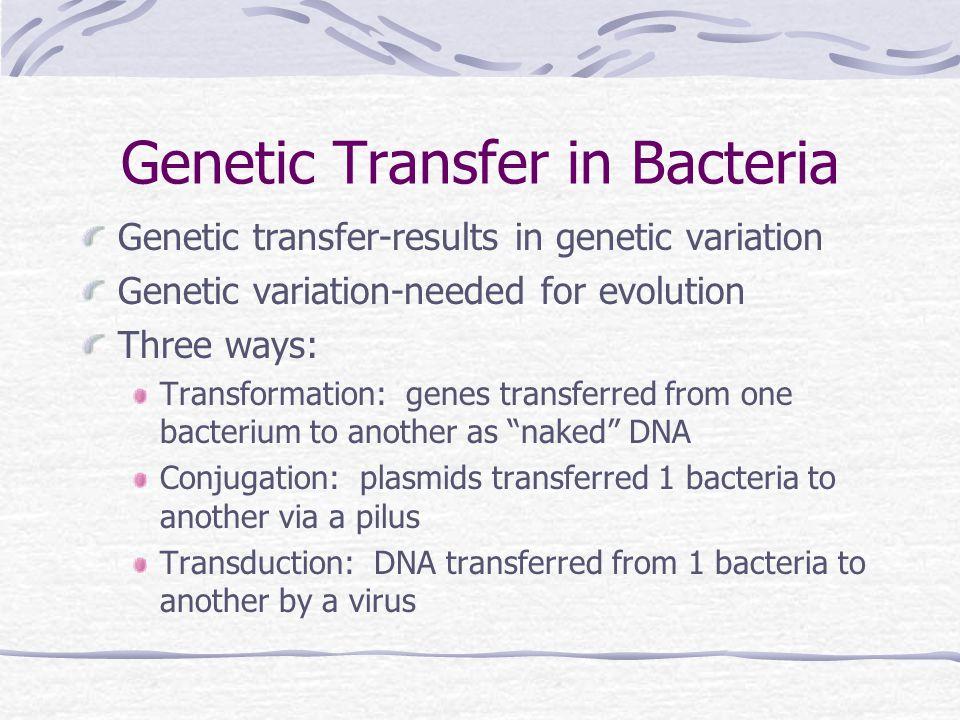 Genetic Transfer in Bacteria Genetic transfer-results in genetic variation Genetic variation-needed for evolution Three ways: Transformation: genes tr