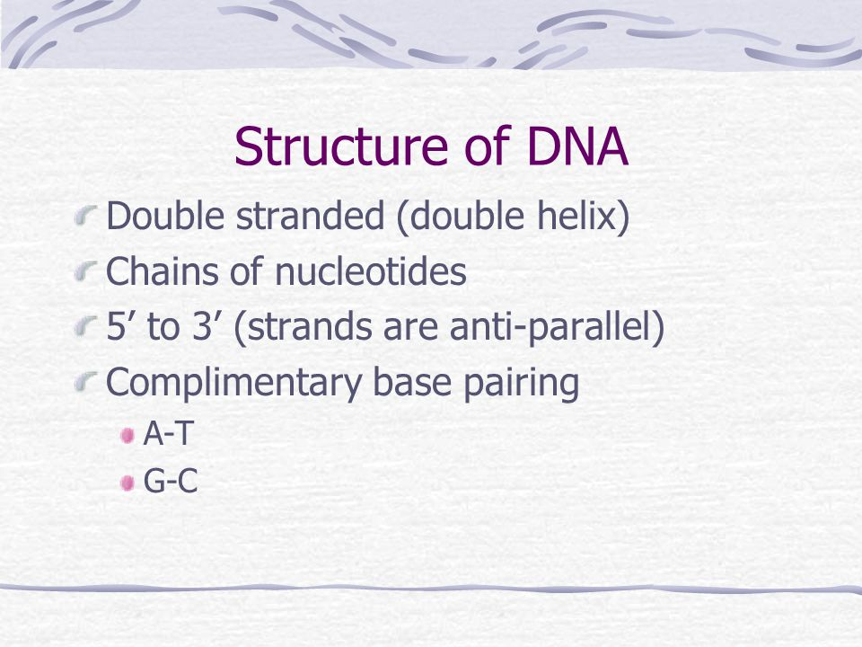 DNA Structure Phosphate-P Sugar-blue Bases-ATGC