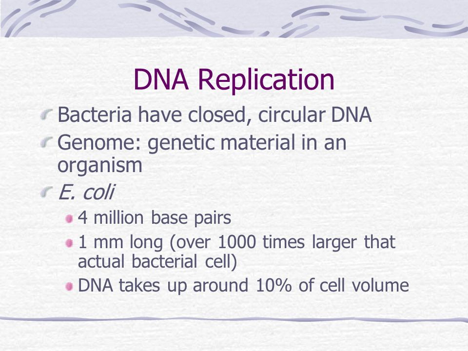 DNA Replication Bacteria have closed, circular DNA Genome: genetic material in an organism E.