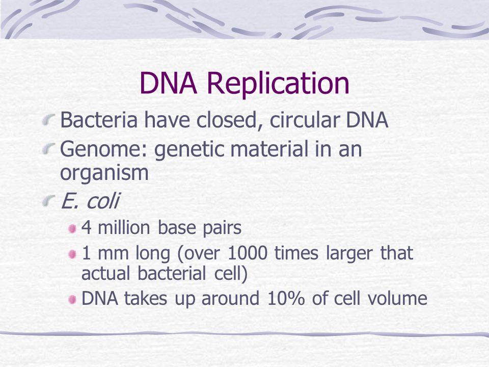 Conjugation in E. coli