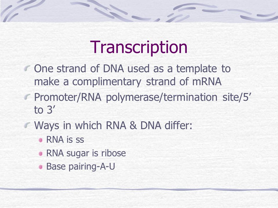 Transcription One strand of DNA used as a template to make a complimentary strand of mRNA Promoter/RNA polymerase/termination site/5' to 3' Ways in which RNA & DNA differ: RNA is ss RNA sugar is ribose Base pairing-A-U