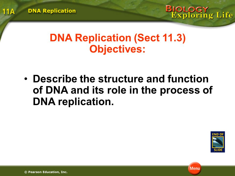 Question 3 Which of the following are instrumental in bonding together the nucleotides of the new strand? D. DNA polymerase C. nucleotides B. purines