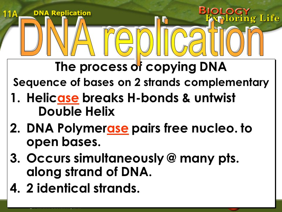 Question 3 Which of the following are instrumental in bonding together the nucleotides of the new strand.