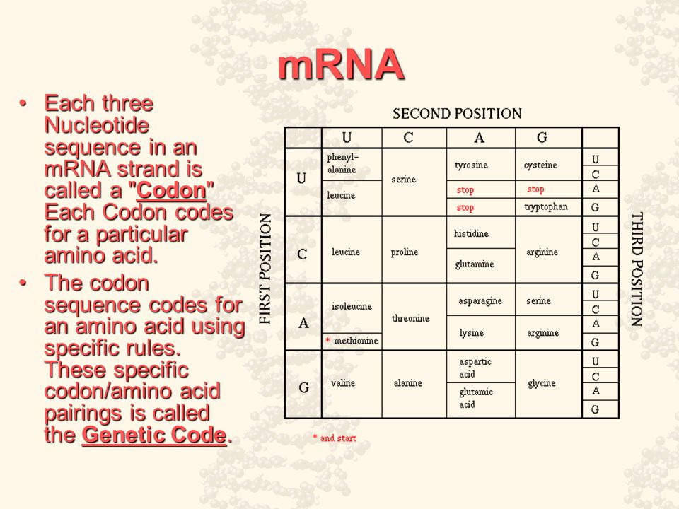 mRNA Each three Nucleotide sequence in an mRNA strand is called a Codon Each Codon codes for a particular amino acid.Each three Nucleotide sequence in an mRNA strand is called a Codon Each Codon codes for a particular amino acid.