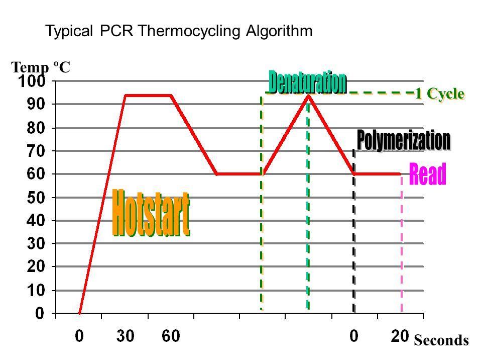 Typical PCR Thermocycling Algorithm Temp ºC Seconds 1 Cycle