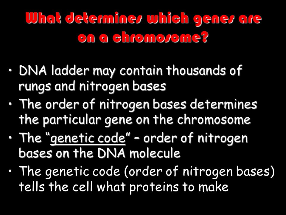 What determines which genes are on a chromosome? DNA ladder may contain thousands of rungs and nitrogen basesDNA ladder may contain thousands of rungs