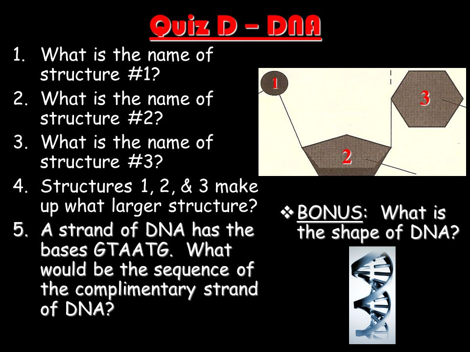 Quiz D – DNA 1.What is the name of structure #1? 2.What is the name of structure #2? 3.What is the name of structure #3? 4.Structures 1, 2, & 3 make u