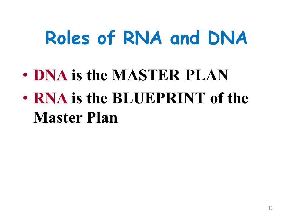 Roles of RNA and DNA DNA is the MASTER PLAN RNA is the BLUEPRINT of the Master Plan 13