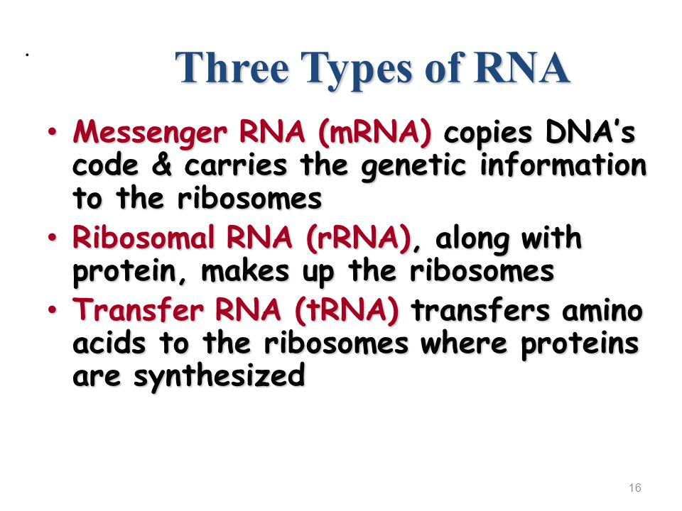 Three Types of RNA Messenger RNA (mRNA) copies DNA's code & carries the genetic information to the ribosomes Messenger RNA (mRNA) copies DNA's code & carries the genetic information to the ribosomes Ribosomal RNA (rRNA), along with protein, makes up the ribosomes Ribosomal RNA (rRNA), along with protein, makes up the ribosomes Transfer RNA (tRNA) transfers amino acids to the ribosomes where proteins are synthesized Transfer RNA (tRNA) transfers amino acids to the ribosomes where proteins are synthesized 16.