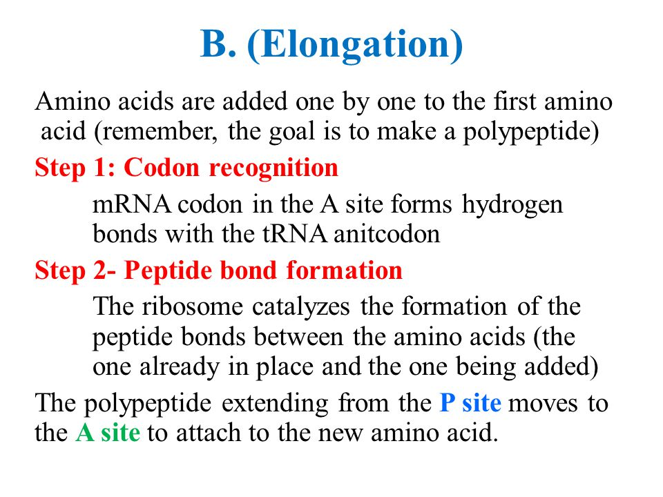 B. (Elongation) Amino acids are added one by one to the first amino acid (remember, the goal is to make a polypeptide) Step 1: Codon recognition mRNA