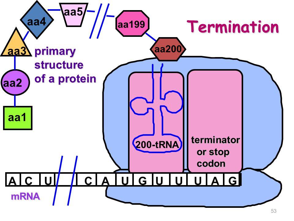 53 mRNA ACAUGU aa1 aa2 U primarystructure of a protein aa3 200-tRNA aa4 UAG aa5 CU aa200 aa199 terminator or stop or stop codon codon Termination