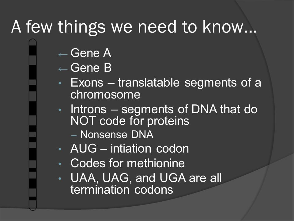 A few things we need to know… ← Gene A ← Gene B Exons – translatable segments of a chromosome Introns – segments of DNA that do NOT code for proteins