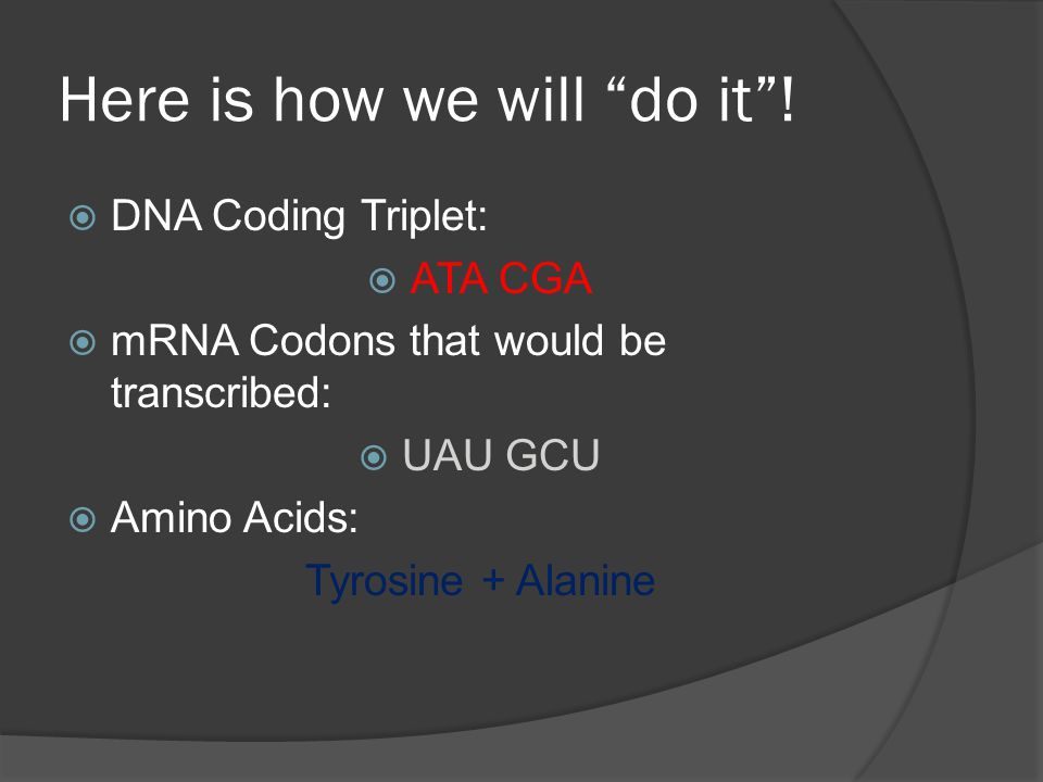 "Here is how we will ""do it""!  DNA Coding Triplet:  ATA CGA  mRNA Codons that would be transcribed:  UAU GCU  Amino Acids: Tyrosine + Alanine"