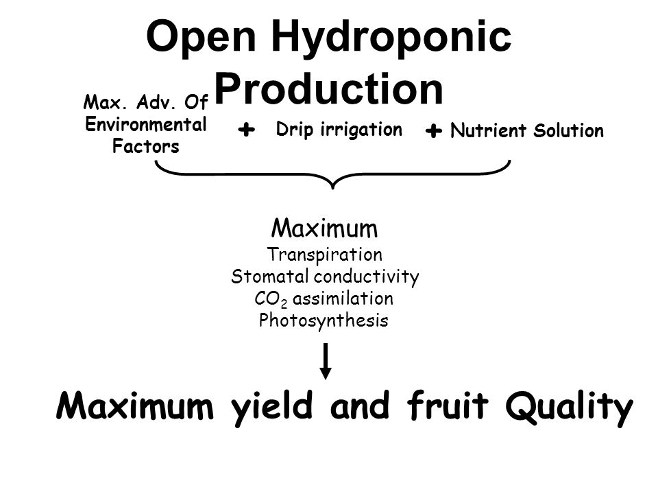 Open Hydroponic Production Max. Adv.