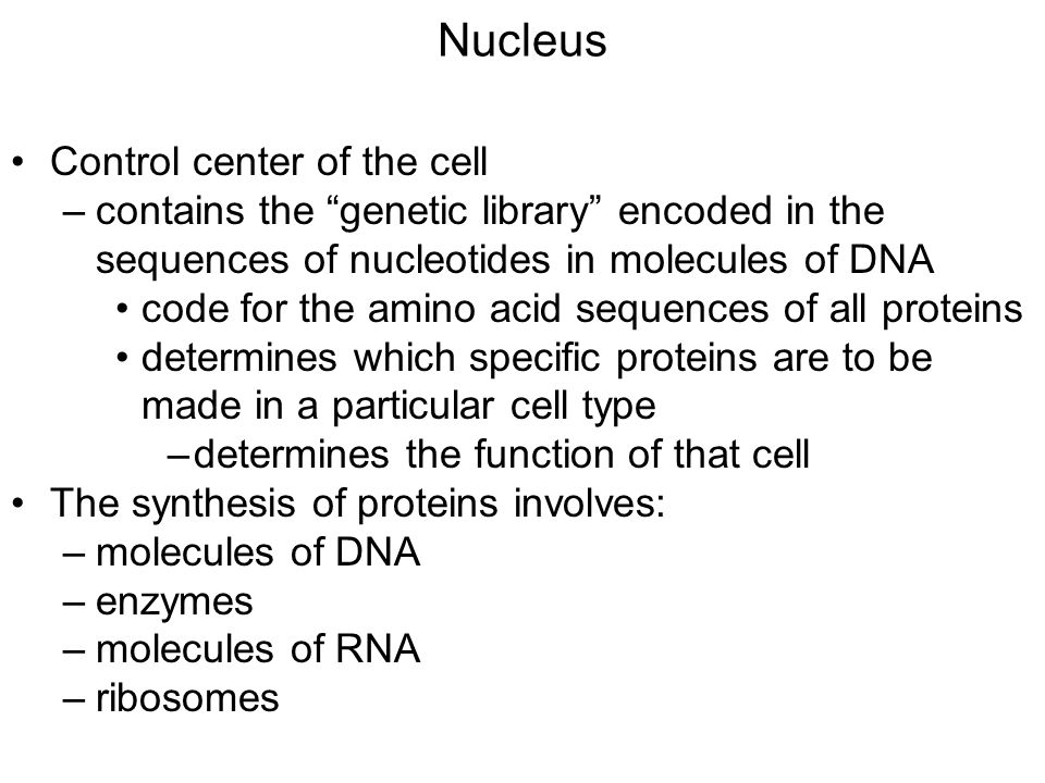 "Nucleus Control center of the cell –contains the ""genetic library"" encoded in the sequences of nucleotides in molecules of DNA code for the amino acid"