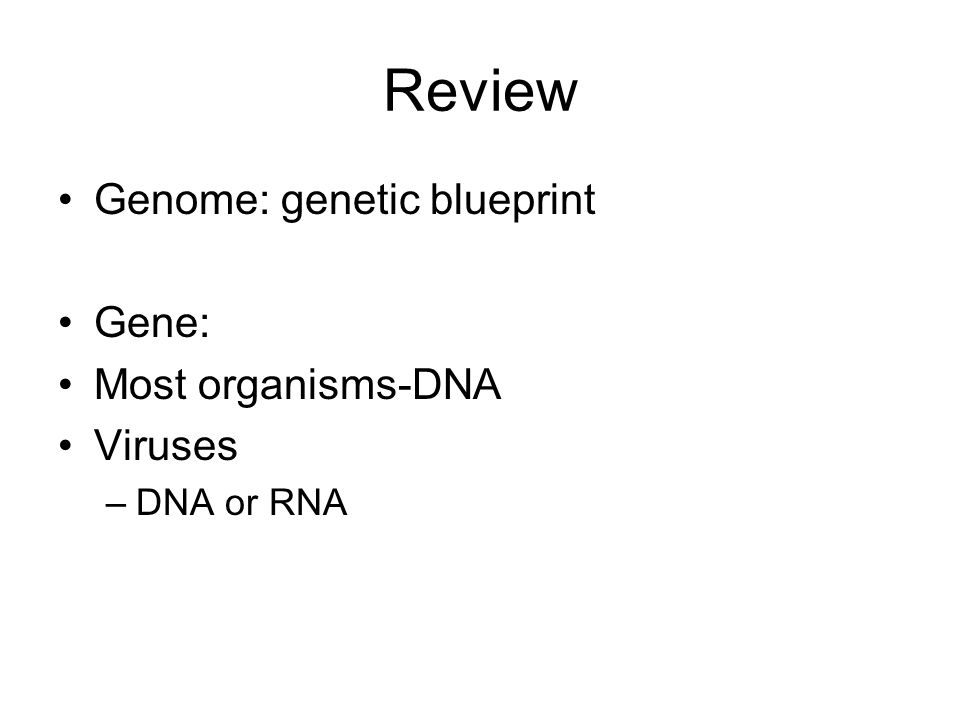 Review Genome: genetic blueprint Gene: Most organisms-DNA Viruses –DNA or RNA
