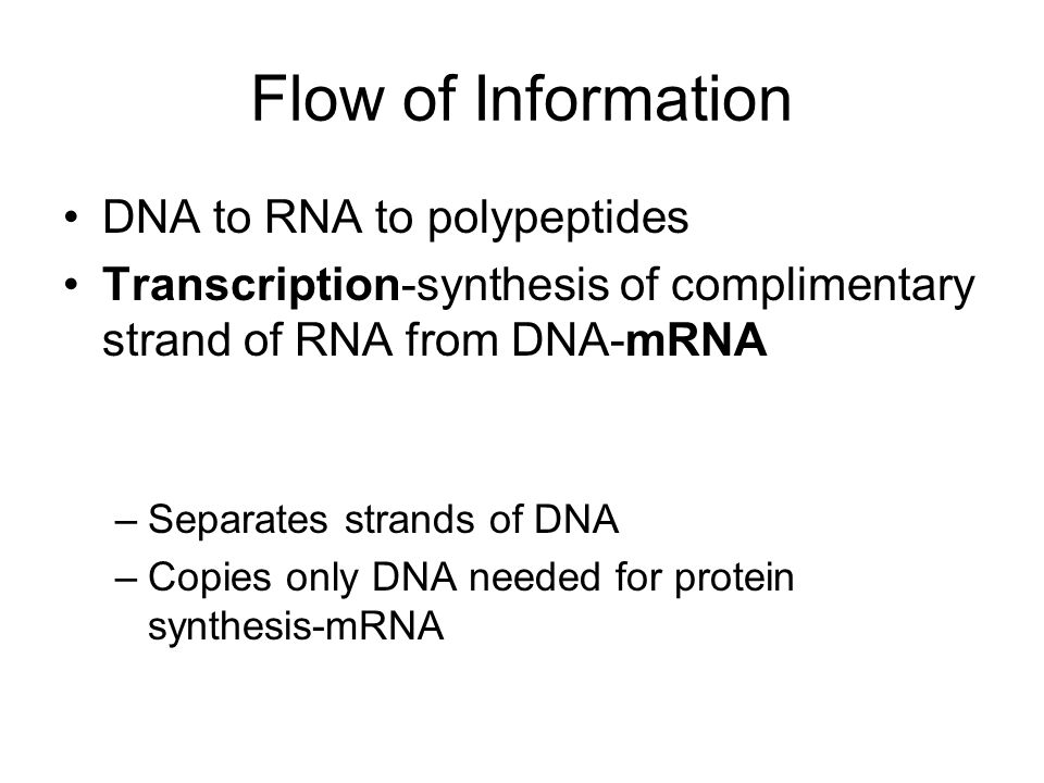 Flow of Information DNA to RNA to polypeptides Transcription-synthesis of complimentary strand of RNA from DNA-mRNA –Separates strands of DNA –Copies only DNA needed for protein synthesis-mRNA