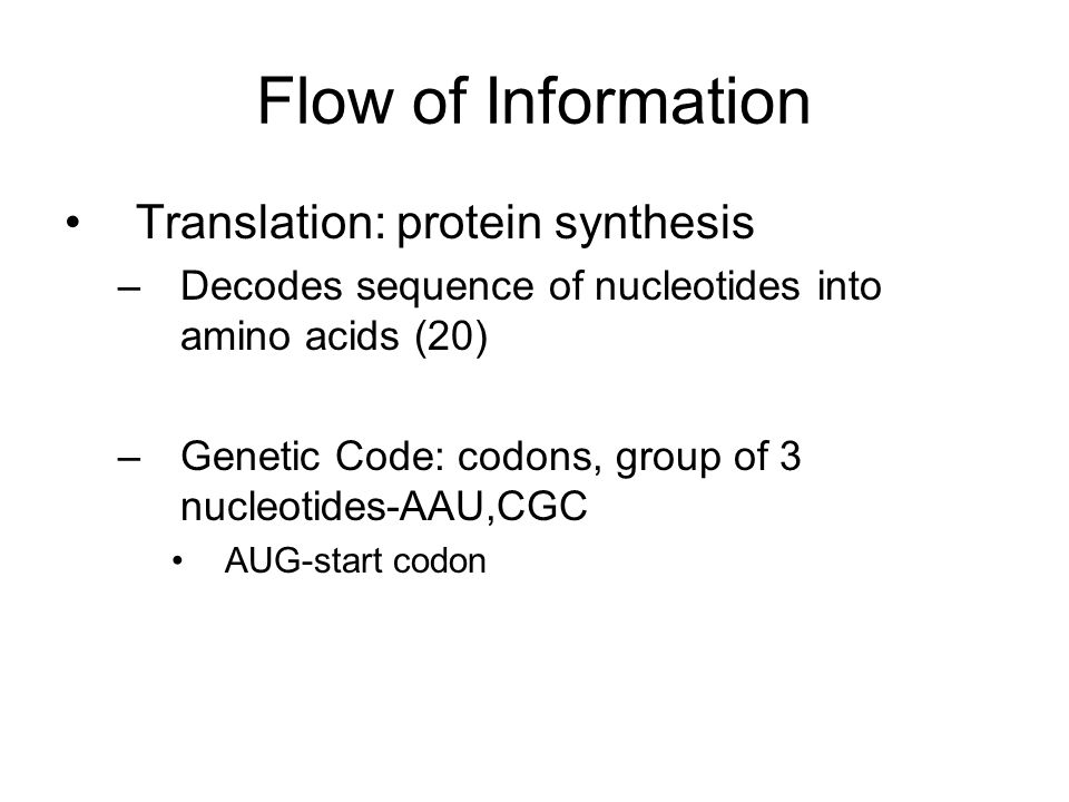 Flow of Information Translation: protein synthesis –Decodes sequence of nucleotides into amino acids (20) –Genetic Code: codons, group of 3 nucleotides-AAU,CGC AUG-start codon