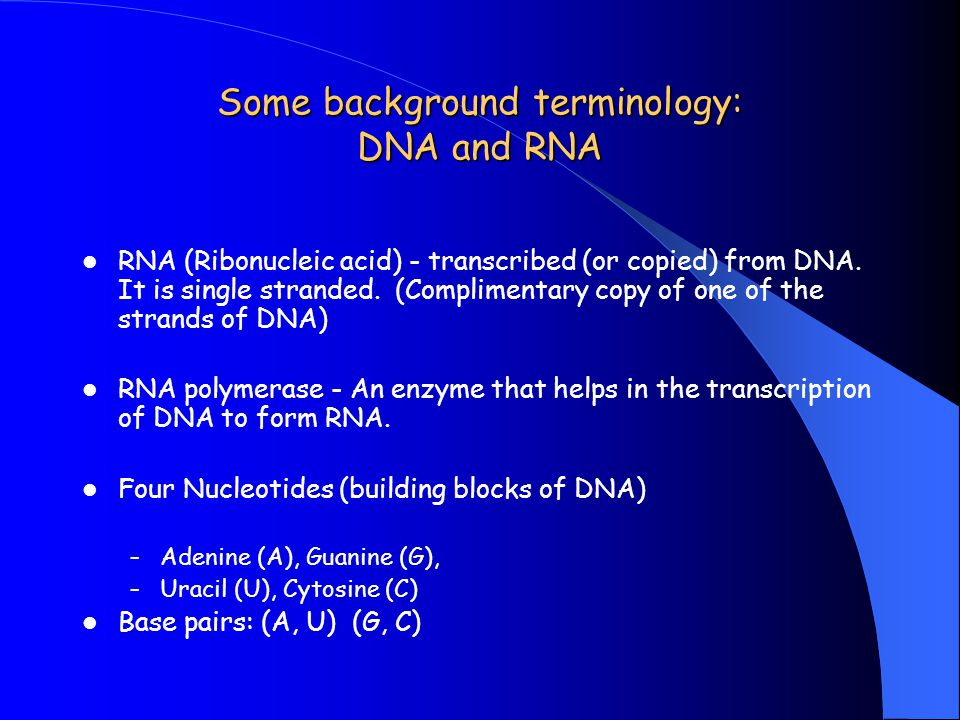 Some background terminology: DNA and RNA RNA (Ribonucleic acid) - transcribed (or copied) from DNA. It is single stranded. (Complimentary copy of one