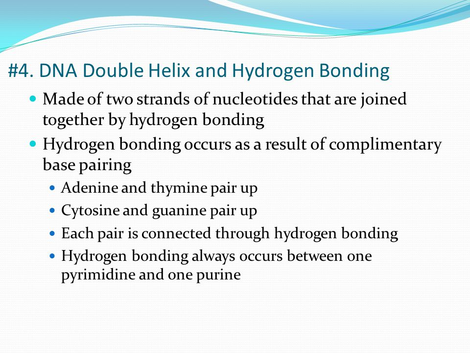 Complimentary base pairing of pyrimidines and purines #4. DNA Double Helix and Hydrogen Bonding