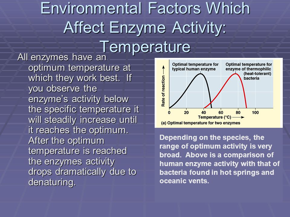 Environmental Factors Which Affect Enzyme Activity: Temperature All enzymes have an optimum temperature at which they work best.