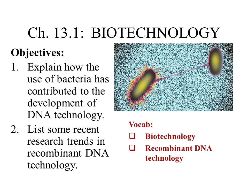Ch. 13.1: BIOTECHNOLOGY Objectives: 1.Explain how the use of bacteria has contributed to the development of DNA technology. 2.List some recent researc