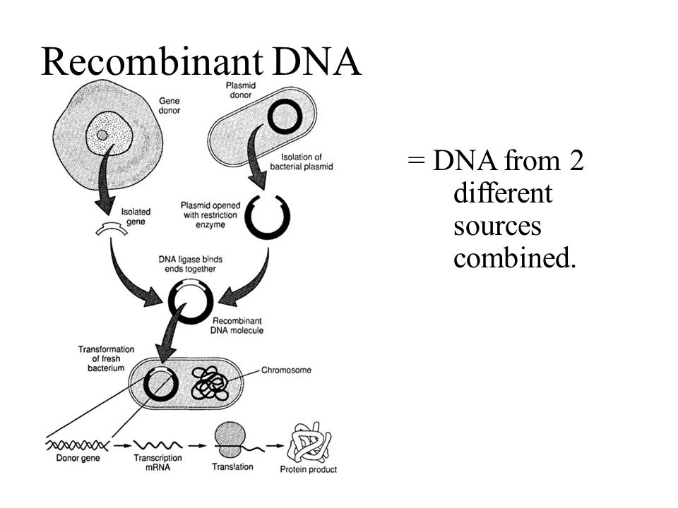 Recombinant DNA = DNA from 2 different sources combined.