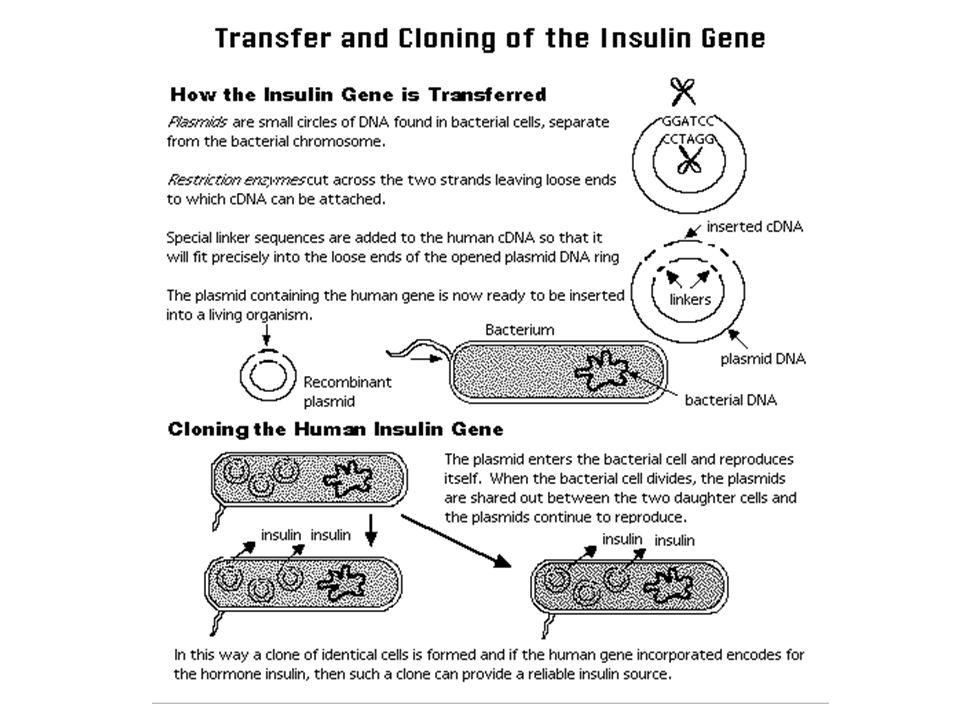 Lab: Recombinant Paper Plasmids Goal: Insert human gene for insulin production into bacteria plasmid.