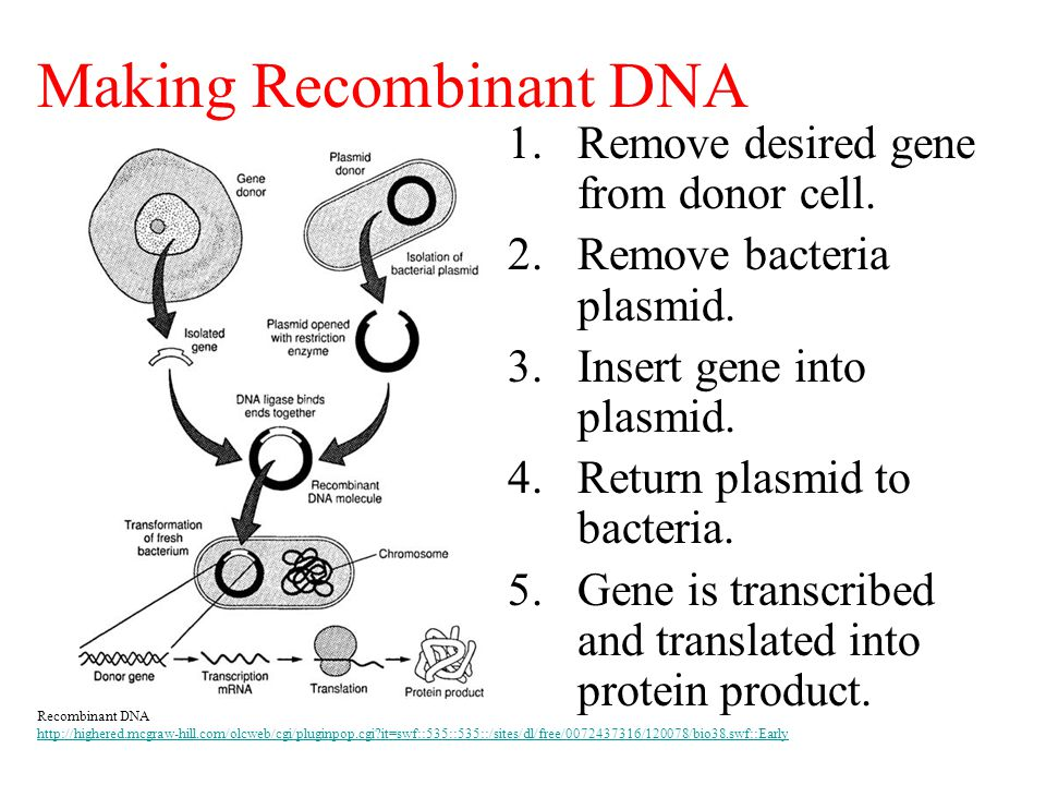 Making Recombinant DNA 1.Remove desired gene from donor cell. 2.Remove bacteria plasmid. 3.Insert gene into plasmid. 4.Return plasmid to bacteria. 5.G