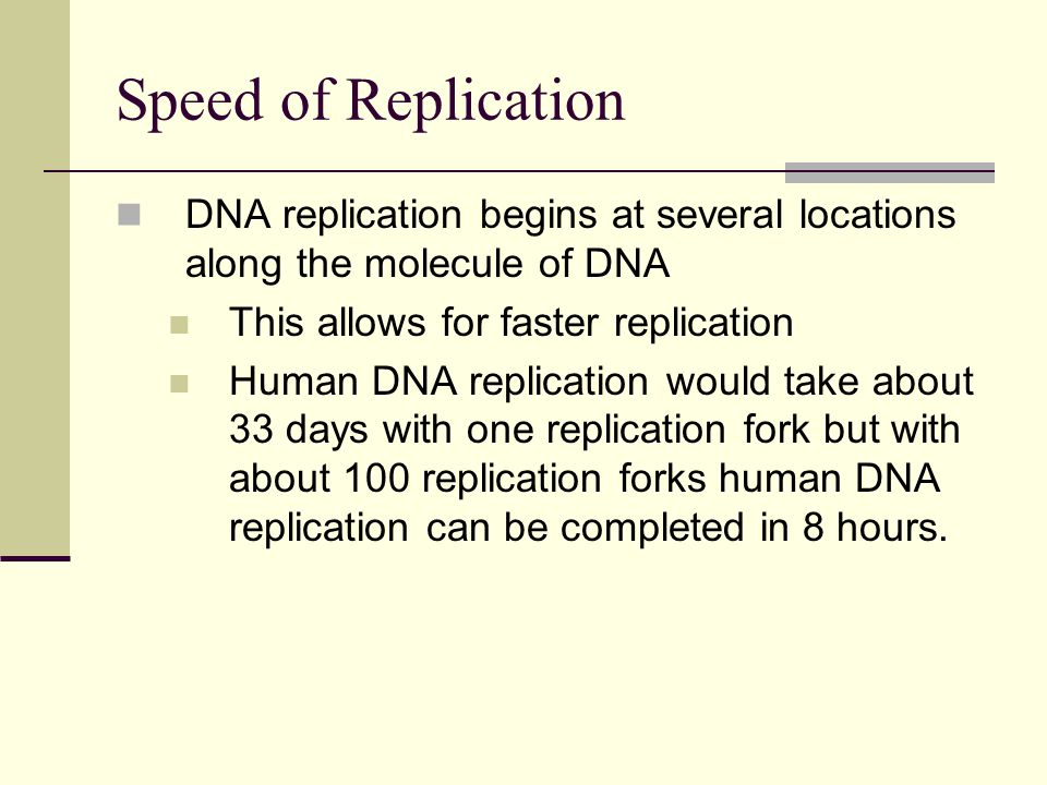 Speed of Replication DNA replication begins at several locations along the molecule of DNA This allows for faster replication Human DNA replication would take about 33 days with one replication fork but with about 100 replication forks human DNA replication can be completed in 8 hours.