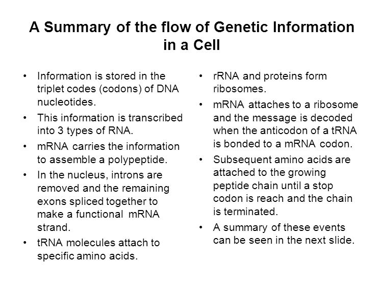 A Summary of the flow of Genetic Information in a Cell Information is stored in the triplet codes (codons) of DNA nucleotides.