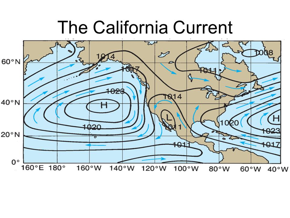 The California Current