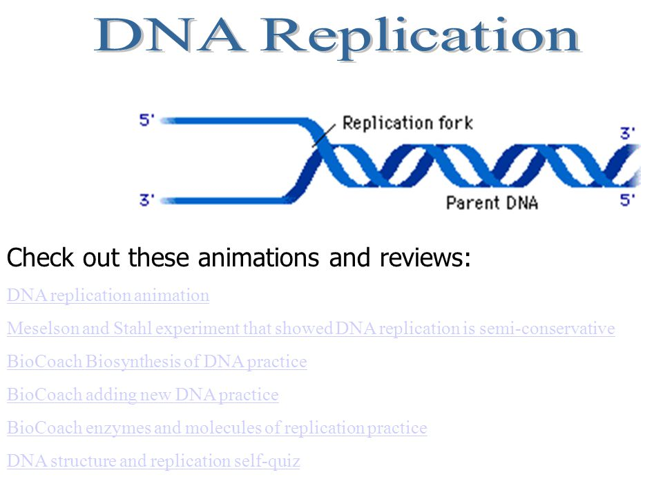 Check out these animations and reviews: DNA replication animation Meselson and Stahl experiment that showed DNA replication is semi-conservative BioCo