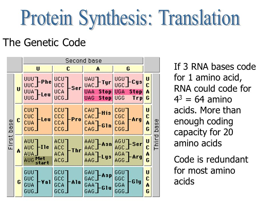 The Genetic Code If 3 RNA bases code for 1 amino acid, RNA could code for 4 3 = 64 amino acids. More than enough coding capacity for 20 amino acids Co