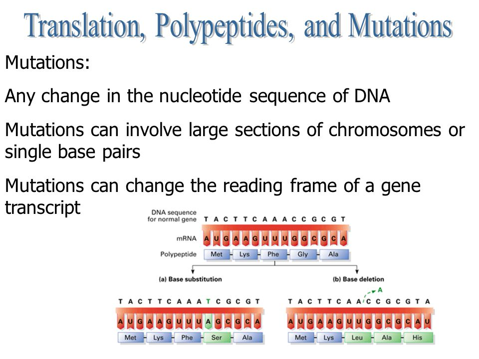 Mutations: Any change in the nucleotide sequence of DNA Mutations can involve large sections of chromosomes or single base pairs Mutations can change