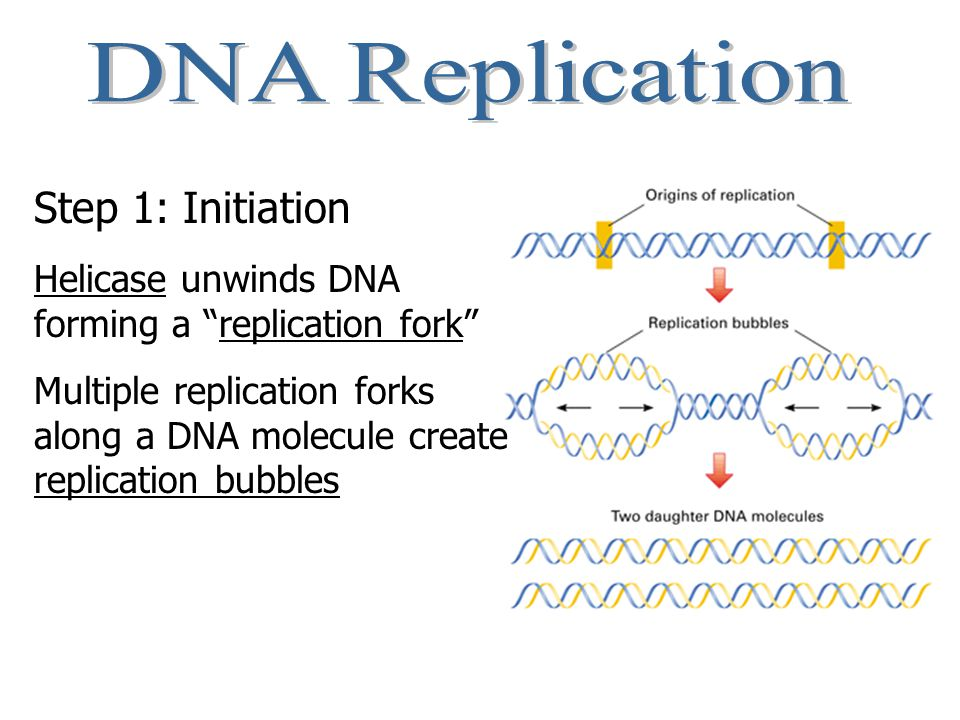 Normally, the genetic code is translated and the correct protein is formed from a long chain of amino acids.
