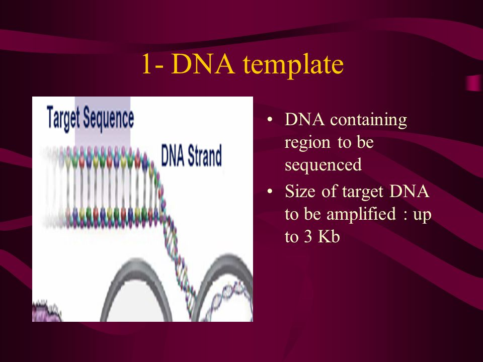 1- DNA template DNA containing region to be sequenced Size of target DNA to be amplified : up to 3 Kb