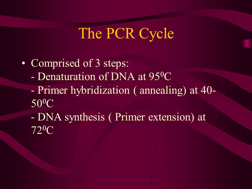 The PCR Cycle Comprised of 3 steps: - Denaturation of DNA at 95 0 C - Primer hybridization ( annealing) at 40- 50 0 C - DNA synthesis ( Primer extensi