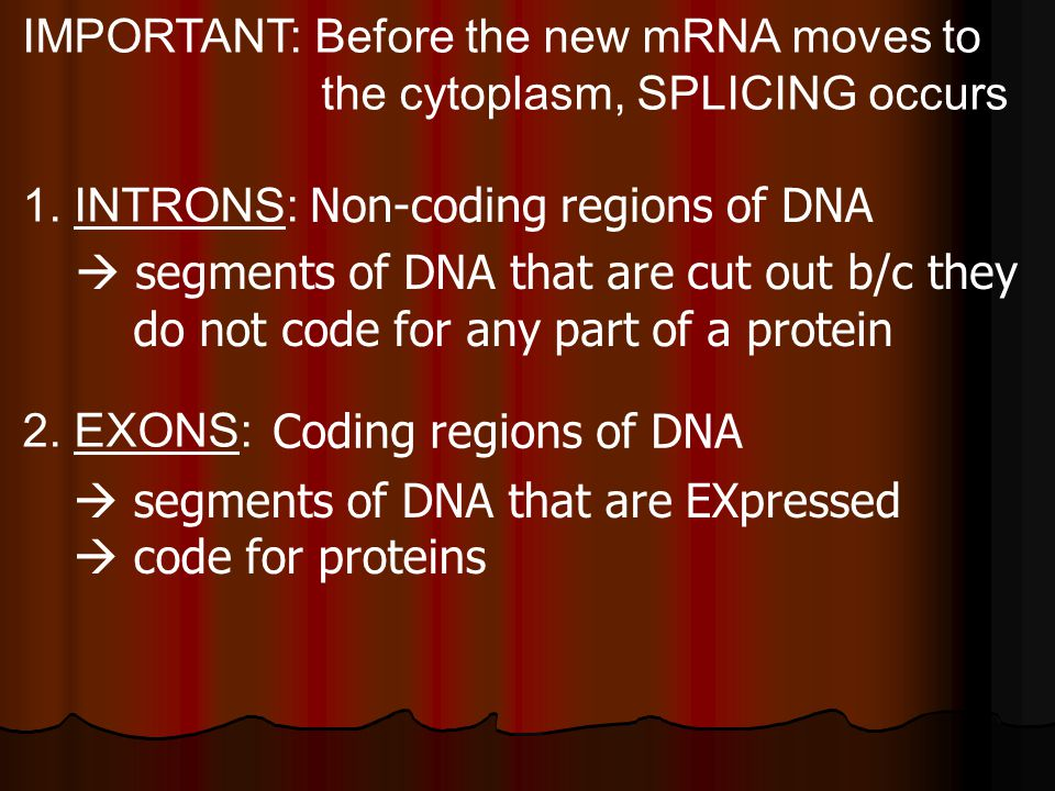 IMPORTANT: Before the new mRNA moves to the cytoplasm, SPLICING occurs 1.