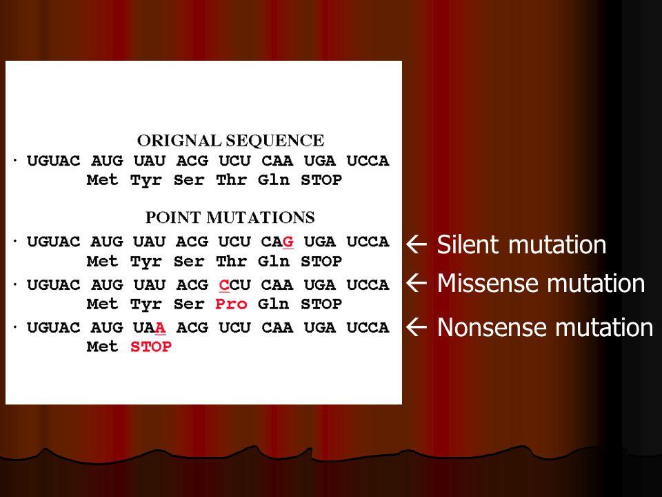  Silent mutation  Missense mutation  Nonsense mutation