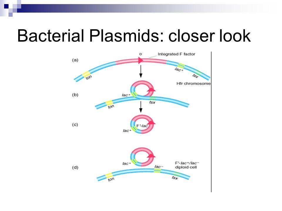 Bacterial Plasmids: closer look