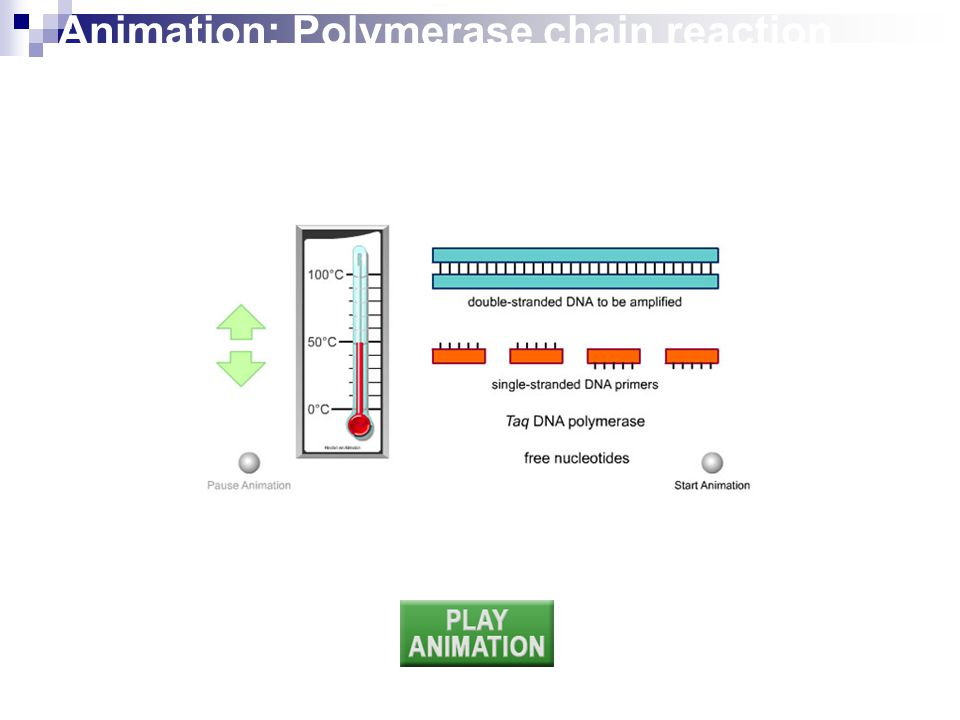 Animation: Polymerase chain reaction (PCR)