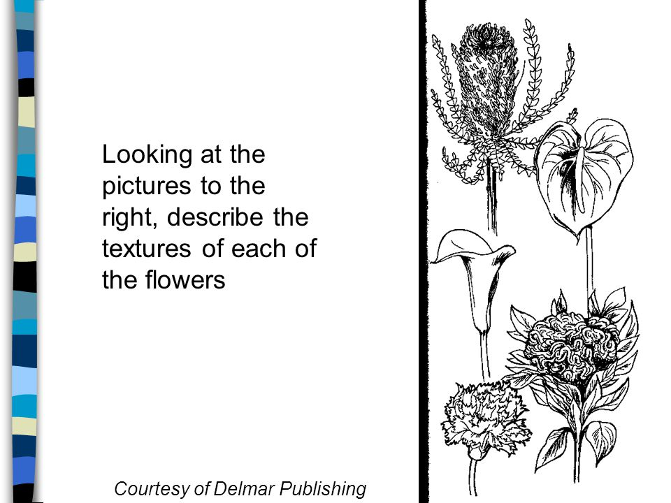 Looking at the pictures to the right, describe the textures of each of the flowers Courtesy of Delmar Publishing