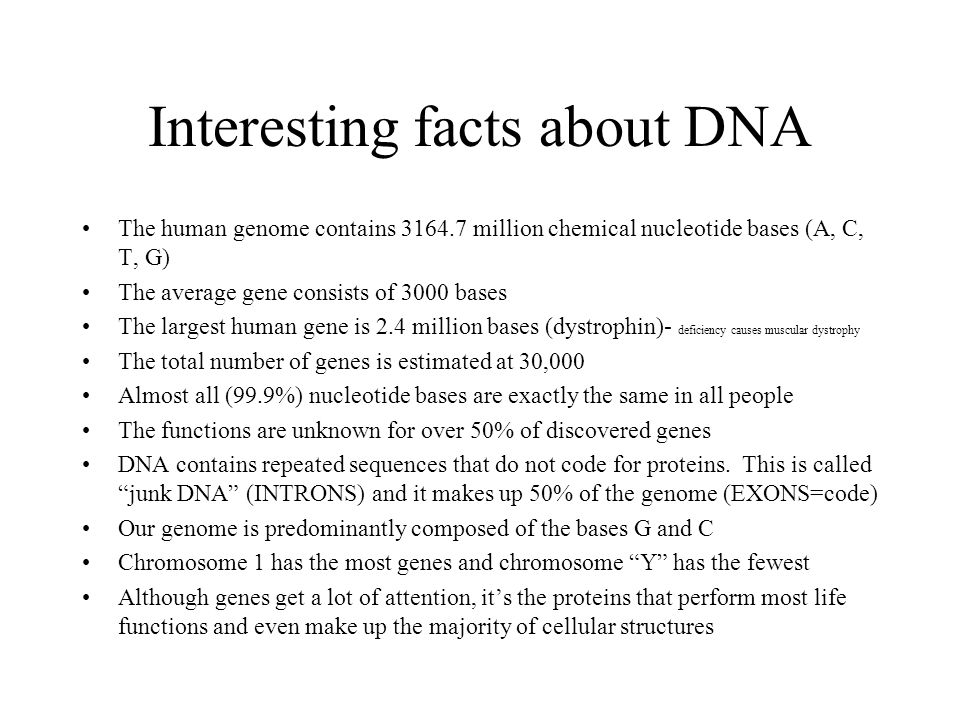 Interesting facts about DNA The human genome contains 3164.7 million chemical nucleotide bases (A, C, T, G) The average gene consists of 3000 bases The largest human gene is 2.4 million bases (dystrophin)- deficiency causes muscular dystrophy The total number of genes is estimated at 30,000 Almost all (99.9%) nucleotide bases are exactly the same in all people The functions are unknown for over 50% of discovered genes DNA contains repeated sequences that do not code for proteins.