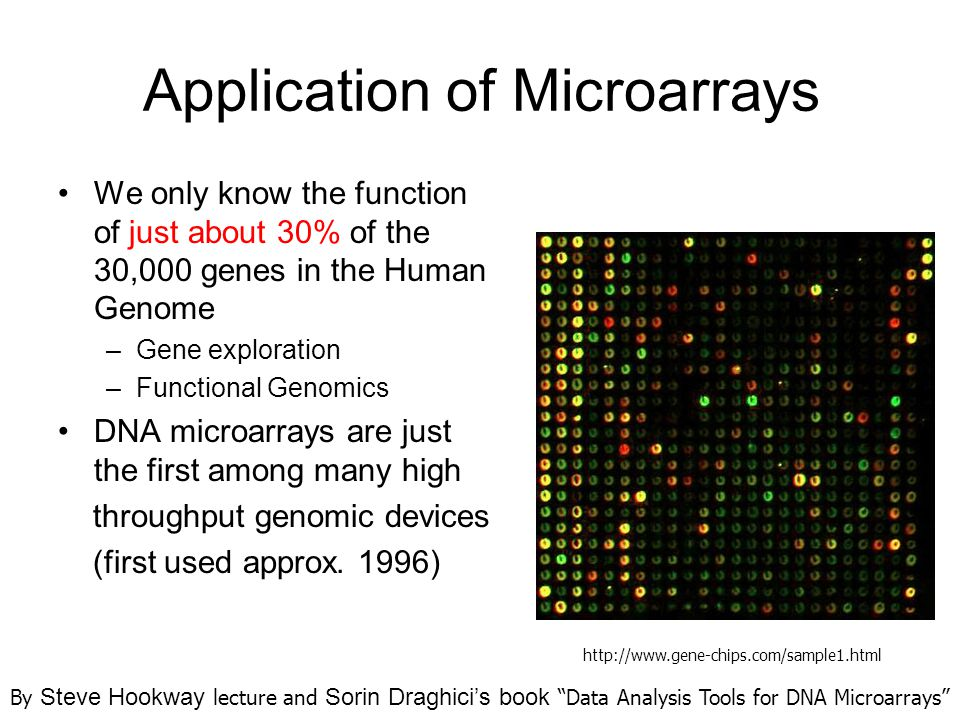 Application of Microarrays We only know the function of just about 30% of the 30,000 genes in the Human Genome –Gene exploration –Functional Genomics