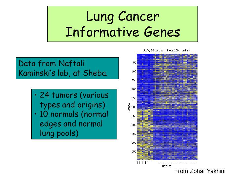Lung Cancer Informative Genes Data from Naftali Kaminski's lab, at Sheba. 24 tumors (various types and origins) 10 normals (normal edges and normal lu