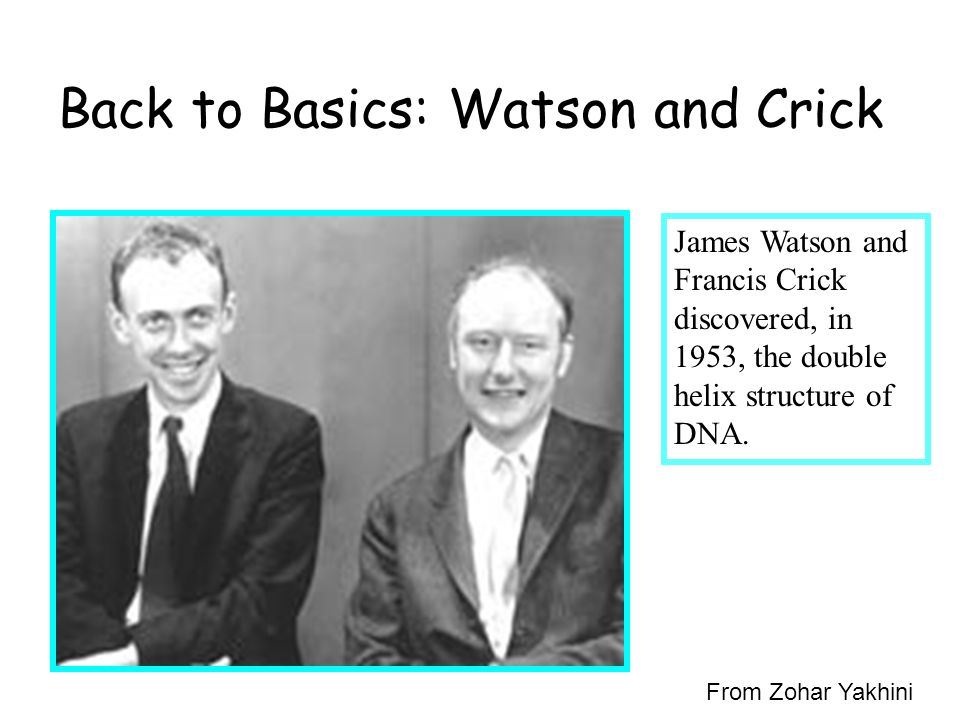Back to Basics: Watson and Crick James Watson and Francis Crick discovered, in 1953, the double helix structure of DNA.
