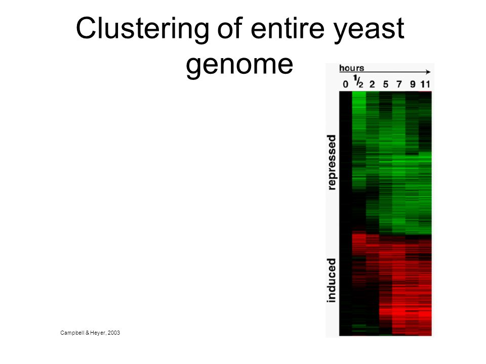 Clustering of entire yeast genome Campbell & Heyer, 2003