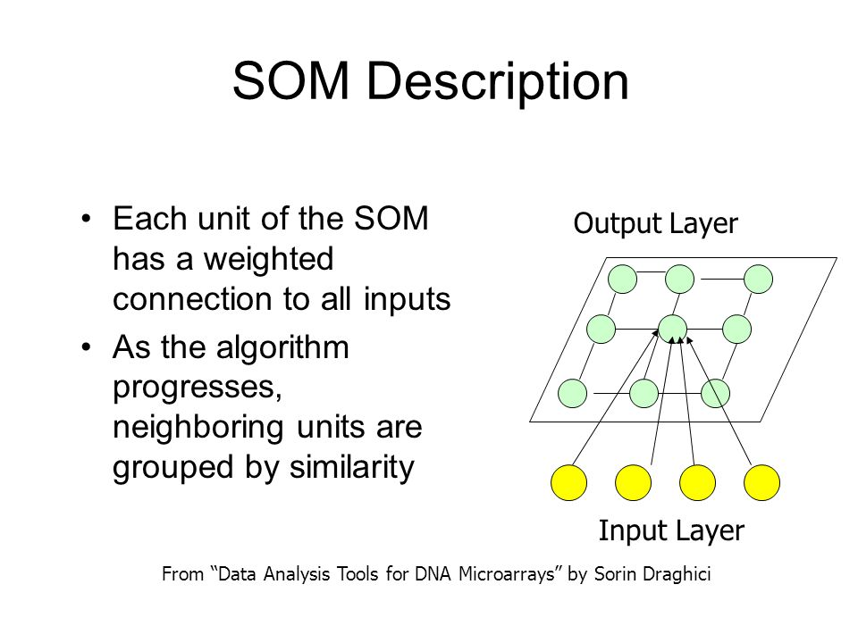 SOM Description Each unit of the SOM has a weighted connection to all inputs As the algorithm progresses, neighboring units are grouped by similarity Input Layer Output Layer From Data Analysis Tools for DNA Microarrays by Sorin Draghici